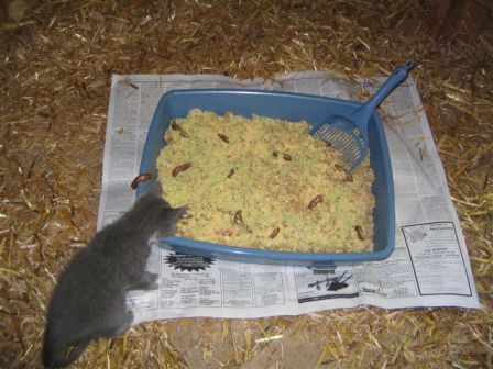 12kitty litter cake